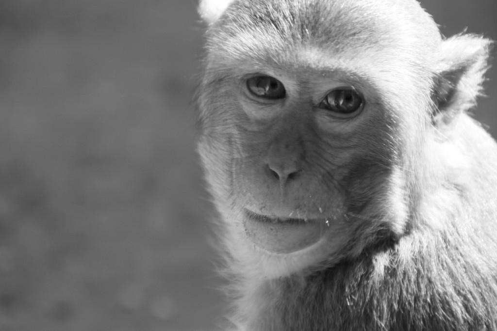 Lors de l'ascension de ce mont des singes nous observent et attentent de la nourriture. ils sont particulièrement agressifs
