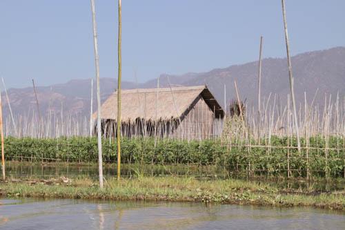 le lac Inle, ses eaux et ses potagers flottants