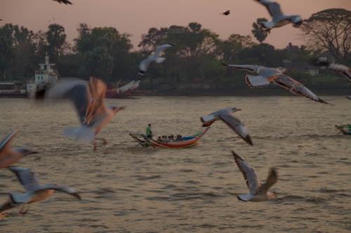 Yangon river et les mouettes rougies par le coucher de soleil